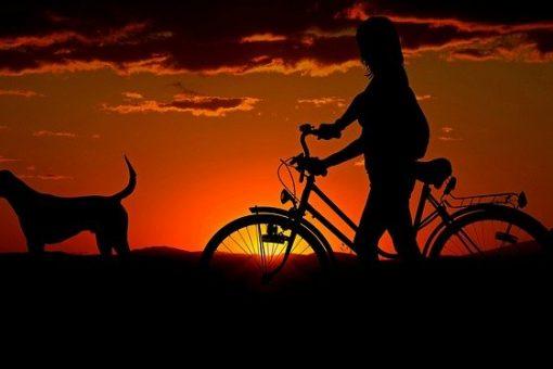 bagażnik samochodowy na rowery