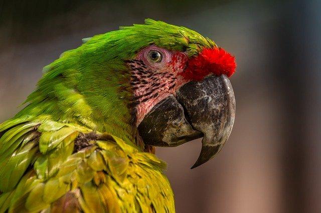 pokarm dla papug